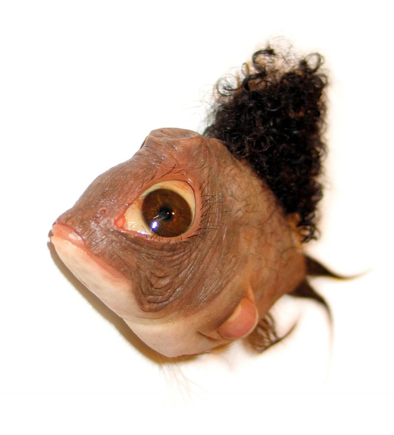 Small African humanfish front