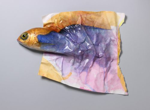 bicolored-paperfish